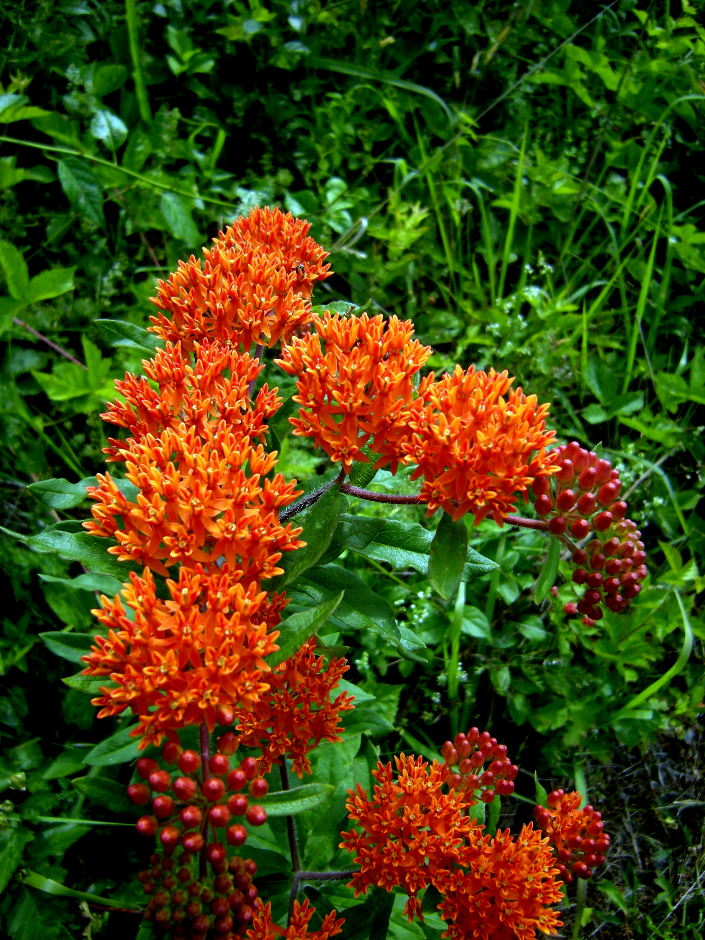 The Rustic Chic Butterfly Bush Rustic Chic